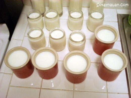 Cách làm sữa chua ngon từ sữa tươi
