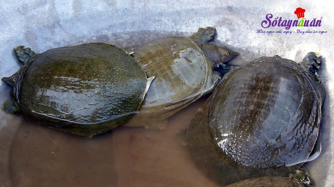 Chọn thủy sản, hải sản - Chọn ba ba