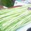 Cách chọn rau củ | Mua các loại rau củ tươi ngon