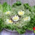 salad nấm, Salad rau mầm tươi