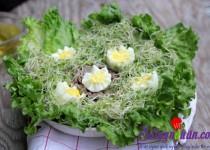 Salad rau mầm tươi