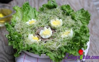 , Salad rau mầm tươi