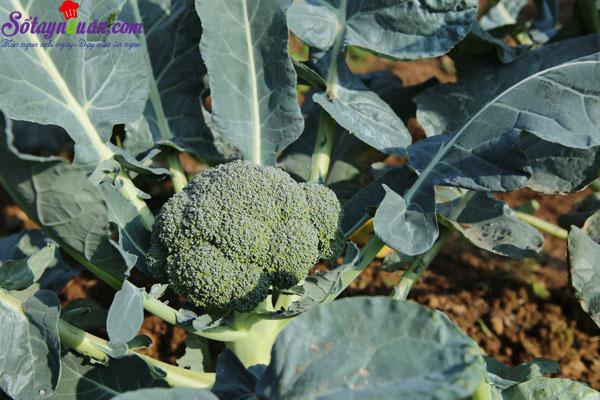 10 thực phẩm tốt cho người bệnh gout 5