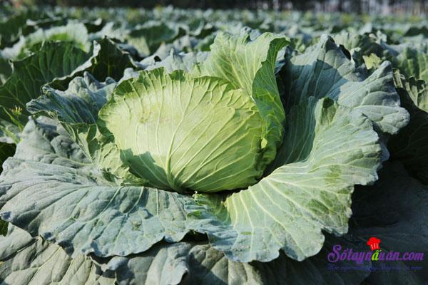 10 thực phẩm tốt cho người bệnh gout 9